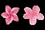 fiorellini-l'aura del benessere